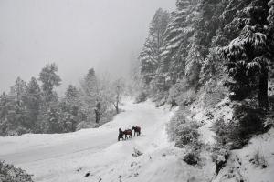 Kosovë, borë